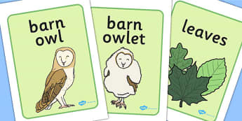Owl Babies Display Posters - Owl Babies, Martin Waddell,  story, story book, story book resources, story sequencing, story resources, owl, family, PSHE, PSE, living things, Display Posters, A4, display, posters,
