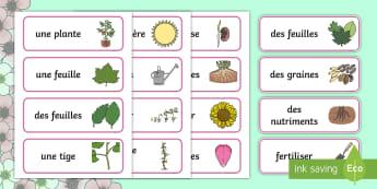 Cartes de vocabulaire : Les plantes Cartes de vocabulaire - printemps, plante, fleur, végétaux, le vivant, cycle de vie, reproduction, cycle 3, cycle 1, cycle