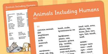 KS1 Animals Including Humans Scientific Vocab Progression Poster
