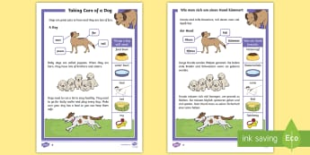 KS1 How To Look After a Dog Differentiated Reading Comprehension Activity English/German - EAL, German, Pets, pet, EYFS, KS1, take, care, look, after, family, member, members, vet, vet surger