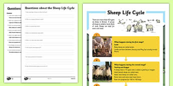 Sheep Life Cycle Differentiated Reading Comprehension Activity