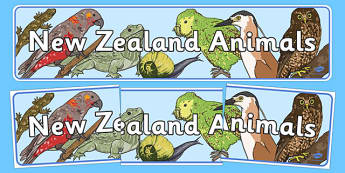New Zealand Animals Display Banner - New Zealand Animals Display Posters, animals, New Zealand, display, poster, banner, sign, kiwi, parakeet, gecko, skink, grey teal, parrot, paradise shelduck