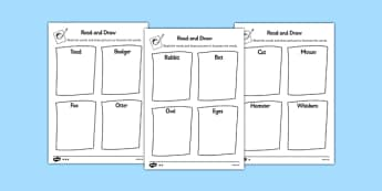 Nocturnal Animals Read and Draw Worksheet - nocturnal, animals, read, draw, worksheet