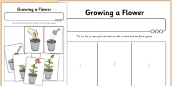 Worksheet / Activity Sheet Growing a Flower - worksheet / activity sheet, growing, flower, worksheet