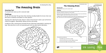 The Amazing Brain Activity Sheet - amazing fact august, colouring, meditation, brain, brain awareness, stress relief, relaxing, workshe