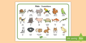 Pets Word Mat English/Afrikaans - Cat, dog, birds, nature, tame, fish, literacy, EAL
