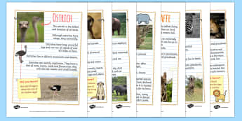 Safari Animal Fact FileDisplay Posters - safari, on safari, safari animal factfiles, safari animals, safari animals information, safari animal posters