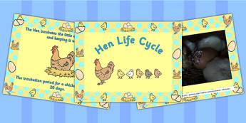 Hen Life Cycle PowerPoint - australia, hen, life cycle