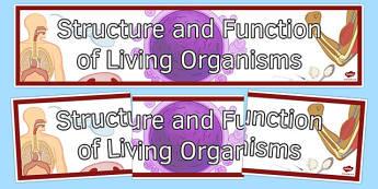 KS3 - Year 7 Science Worksheets, Year 8 Science Worksheets