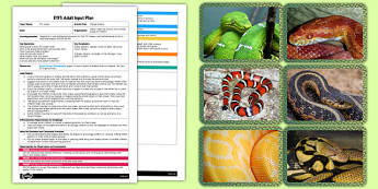 Zigzag Snakes EYFS Adult Input Plan and Resource Pack- animals, plan