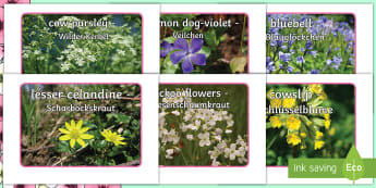 Spring Flowers Display Photos English/German - EAL, German, Spring, british flwoers, woods, woodlands, photographs, spring display, display, season