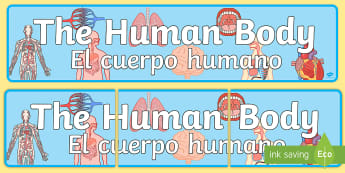 The Human Body Display Banner English/Spanish - EAL,The Human Body Display Banner - ourselves, body, science, header, sceince, oursleves, ourselvs,