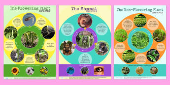 Comparing Different Life Cycles Display Posters Pack - lifecycles