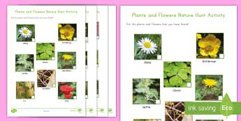 Plants and Flowers Nature Hunt Activity - Plants and flowers nature hunt activity, plants, flowers, nature walk, nature hunt, nature scavenger