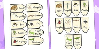 Minibeasts Investigation Lab Species Tags - role play, props
