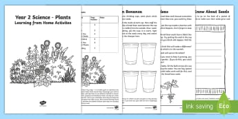 Year 2 Science Plants Learning from Home Activity Booklet - Key Stage 1, national curriculum, home learning, parents,