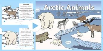Winter Arctic Animals Habitat PowerPoint English/Mandarin Chinese - arctic animals, winter, adaptations, habitat, EAL