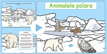 Animalele polare - Prezentare PowerPoint - animale polare, prezentare power point, animale, poli, iarna, materiale, materiale didactice, română, romana, material, material didactic