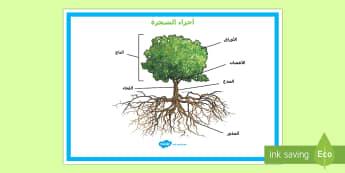 ملصق عرض حول أجزاء الشجرة - أجزاء، الشجرة، ملصق، عرض، وسائل، عرض، علوم، أحياء، نبا