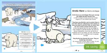 Winter Arctic Animals Habitat PowerPoint English/French - arctic animals  power point, interactive, powerpoint presentation, winter arctic animals, EAL French
