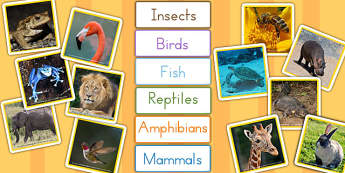Animal Groups Sorting Cards Photos - ordering, sort, group, arrange, nature, creatres, science, maths, key stage 1, early years, infants