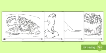 Otter Colouring Pages - Lapbooks, wet play, under the sea, fish, animals, worksheet, boys