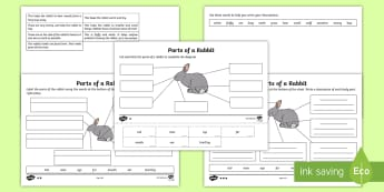 Parts of a Rabbit Differentiated Activity Sheet - Part, body, rabbit, mammal, structure, feature, describe, label, describe and compare the structure