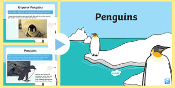 Penguin Fact File PowerPoint - PowerPoint, penguins, fact file, nature, animals, geography, habitats,