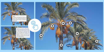 Parts of a Date Palm Picture Hotspot - date palm, dates, UAE heritage, UAE history, uAE About