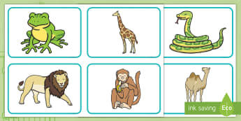 Zoo Animal Picture Cards - Dear Zoo, Rod Campbell, animals, letter to the zoo, giraffe, elephant, monkey, camel, frog, lion, pu