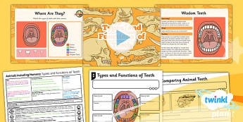 Science: Animals Including Humans: Types and Functions of Teeth Year 4 Lesson Pack 3