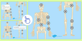 The Human Skeleton Picture Hotspots - KS3/4 Picture Hotspots, Human Skeleton, Bones
