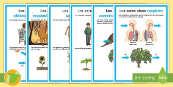 Posters: Las características de los seres vivos - funciones, respiración, excreción, nutrición, respuesta a estímulos, relación