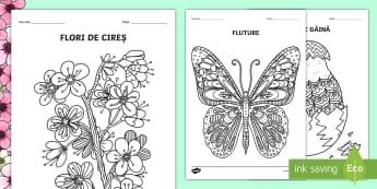 Arte Activități Manuale Materiale Didactice Caf Ciclul