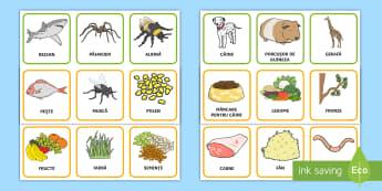 Animalele și alimentele lor Cartonașe pereche - animale, hrana animalelor, română, jocuri, activități, lumea vie, alimentația animalelor,Romani