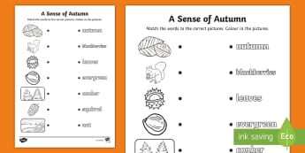 A Sense of Autumn Word and Picture Matching Activity Sheet - exploring my world, seasons, Aistear, school trip, forest, blackberries, squirrels, leaves, bark, li