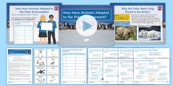 Polar Regions Lesson 3: How Have Animals Adapted to the Polar Environment? - Polar, Adaptation, Animals, Arctic, Antarctic, Polar Bear, Arctic Fox, Leopard seal, Orca, Snowy Owl