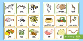 Animals and What They Eat Matching Cards English/Romanian - Animals and What They Eat Matching Cards - animal, matching, game, aniamls, mathching, EAL