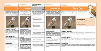 Barn Owls Reading Comprehension Polish/English