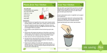Plants From Your Kitchen Activity Sheet - holidays, activity, gardening, growing, science, family, parents, worksheet