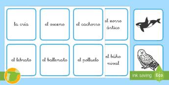 Tarjetas de emparejar: Animales polares y sus crías - animales, hábitats, polares, crías, clasificación