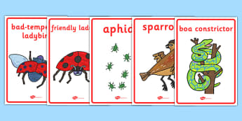 Display Posters to Support Teaching on The Bad Tempered Ladybird - stories, story books