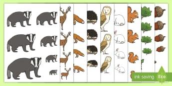 تمرين الغابة للترتيب حسب الحجم  - الحجم، الأحجام، قياس، القياس، الحيوانات، صور، حيوانات