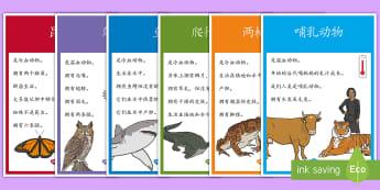 动物种类展示海报 - 动物,动物种类,鸟类,哺乳类,爬行类,展示海报