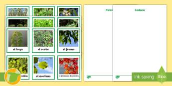 Ficha de actividad: Las plantas de hoja caduca y perenne - hojas, plantas, caduca, perenne, tipos, clasificación
