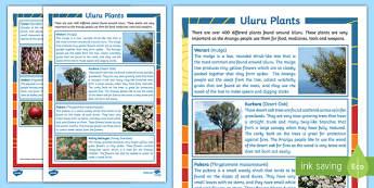 Uluru Plants Fact File