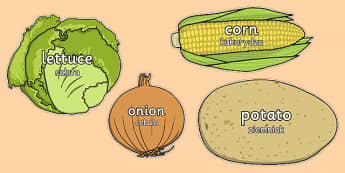 Vegetable Words on Vegetables Polish Translation - polish, vegetable, words