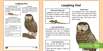 NZ Extinct Birds Laughing Owl Fact Sheet - Aotearoa, native birds, extinct, Year 1-3, birds, fact file, laughing owl