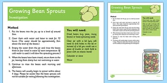 Growing Bean Sprouts Investigation - EYFS planning, Early years activities, adult led, science experiment, UTW, growing, life cycle