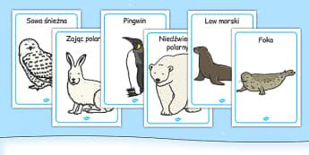 Plakaty Zwierzęta polarne po polsku - arktyka, śnieg, zima